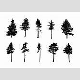 pine-tree-silhouette