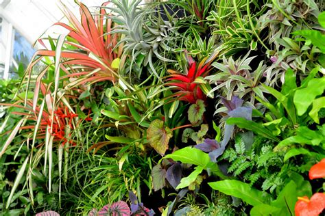 Vertical Garden Plants List Plants On Walls Vertical Garden Systems Conservatory Of
