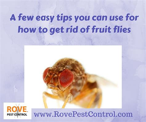 How Can I Get Rid Of Flies In Backyard by A Few Easy Tips You Can Use For How To Get Rid Of Fruit