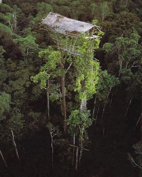 the korowai tribe of new guinea has taken the concept of a