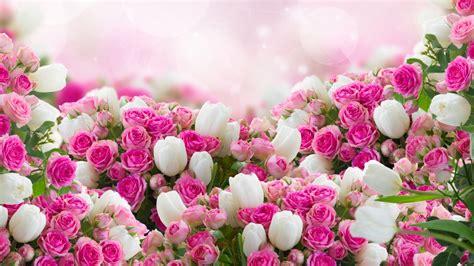 Blume Mit Weißer Blüte by Die 94 Besten Blumen Hintergrundbilder Hd 1920x1080
