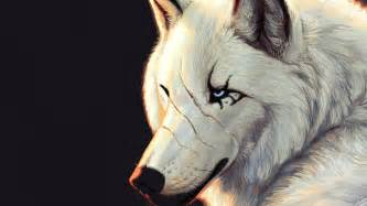 hd wolf wallpapers unique wallpaper