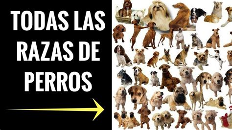 perros todas clases todas las razas de perros del mundo fotos e imagenes de