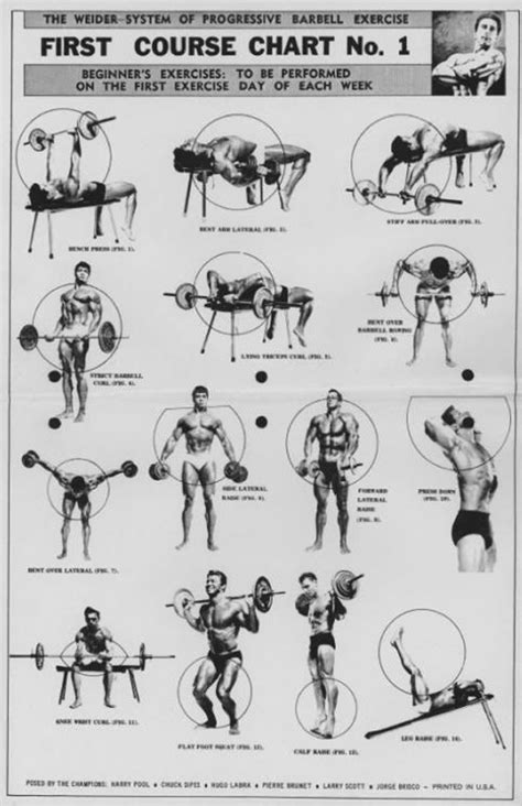 weight bench exercises chart the weider system of progressive barbell exercise