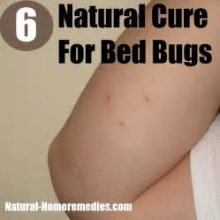 home remedy for bed bugs 6 cures for bed bugs how to cure bed bugs