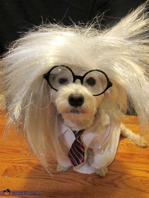 mad puppy mad scientist costume costumes and scientist costume