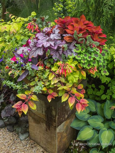 Design For Potted Plants For Shade Ideas 1347 Best Images About Garden Containers Are Dreamers On Pinterest Window Boxes Topiaries And