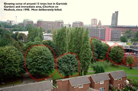 Medlock Gardens by Uk Indymedia Trees Felled In Manchester