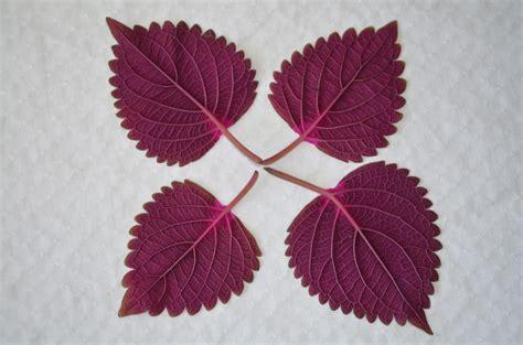 images plant leaf flower purple petal floral heart pattern red natural garden
