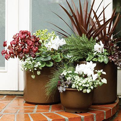 Plants For Planters by Containers For Plants Flower Pots Flowers Magazine