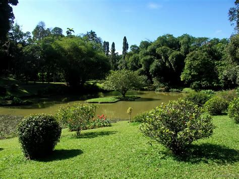 Kandy Botanical Gardens Panoramio Photo Of Sri Lanka Kandy Peradeniya Botanical Garden