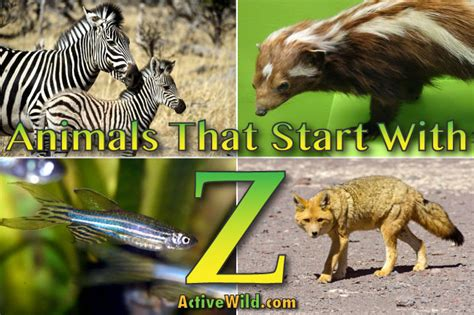 animals that start with u list of amazing animals animals the ultimate guide to the animal kingdom autos post