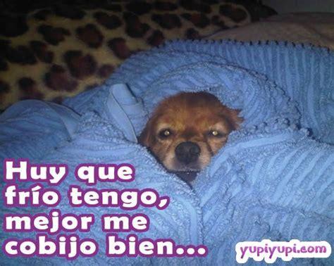 imagenes comicas de tengo frio un perrito con mucho fr 237 o yupiyupi