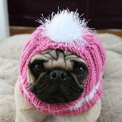 pink pug pink pug pugzilla