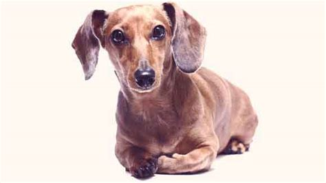 epilepsy in dogs a guide to epilepsy symptoms and causes petcarerx
