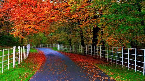wallpaper daun gugur hutan wallpaper taman pohon daun jalan pagar