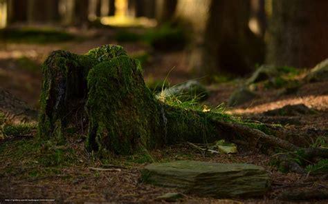 download wallpaper forest stump moss grass free desktop