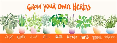 Grow Your Own Herbs by Sam Osborne They Draw Cook
