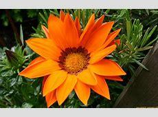 Pflanzen / Blüten / Blumen / Bäume / Heilpflanzen: Rose ... X 2
