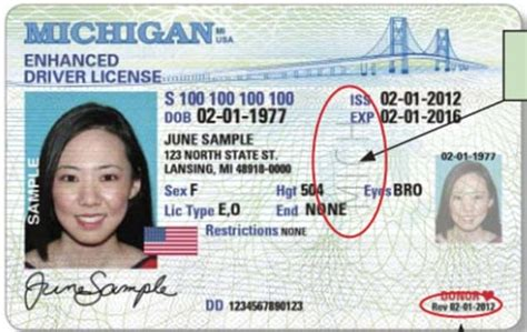 michigan id card template how to spot a driver s license in michigan