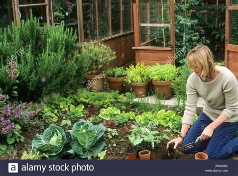 how to plant a vegetable garden modern garden