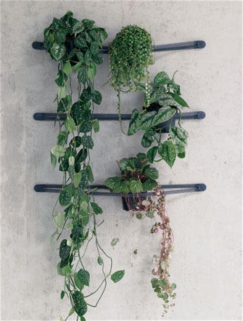 pflanzen an der wand dekorieren zimmerpflanzen 252 berraschend inszeniert