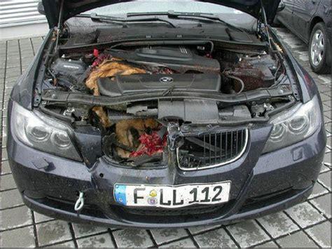 smart car deer deer vs smart car images