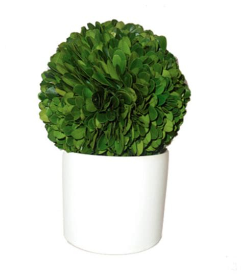 small boxwood topiary traditional plants by design darling