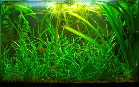 1332371760 histoire veritable et naturelle des l aquariophilie simple et naturelle amazonien et c est