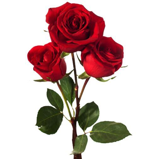 imagenes de rosas sangrientas ramo de rosas floreria en coyoac 225 n naomi