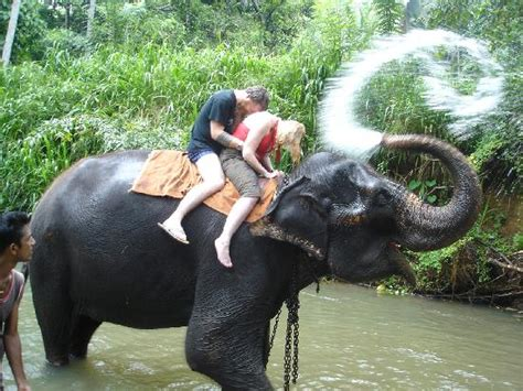 elephant riding - Picture of Club Hotel Dolphin, Waikkal ...