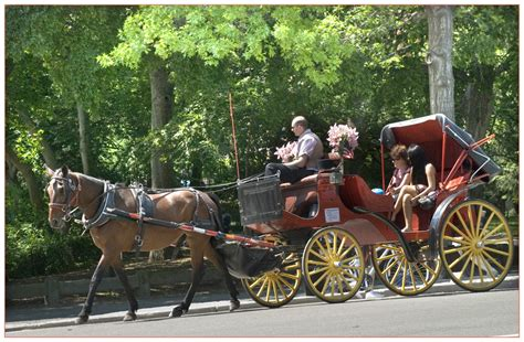 pferd und wagen eine rundfahrt mit pferd und wagen in central park new