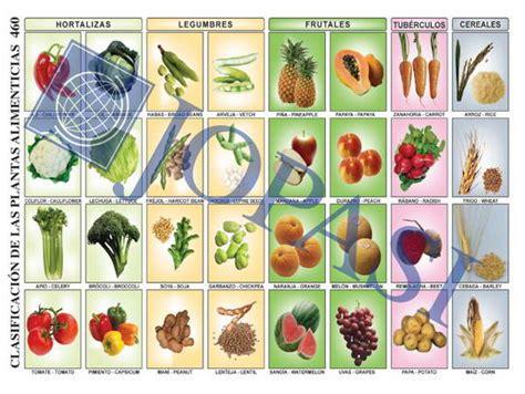 cadenas synonyme list of synonyms and antonyms of the word plantas