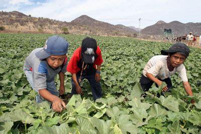 imagenes de niños que trabajan en la calle m 233 xico cuenta con 400 mil ni 241 os jornaleros sumidos en