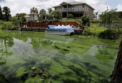 public boat r jacksonville florida gov scott declares emergency over toxic algae outbreaks