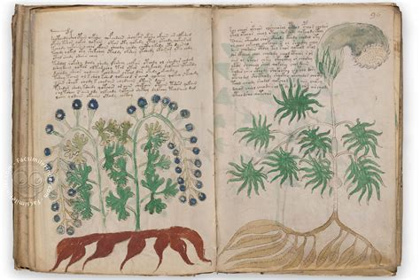 Beinecke Rare Book And Manuscript Library by Voynich Manuscript 171 Facsimile Edition