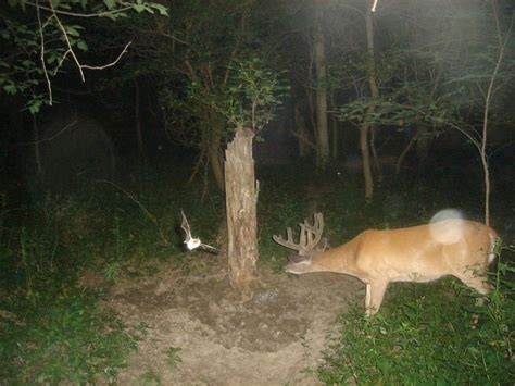 11 best trail cam pics images on pinterest funny animal