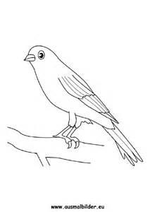 ausmalbilder kanarienvogel kanarienv 246 gel malvorlagen