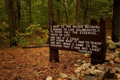 quotes thoreau file thoreaus quote near his cabin site walden pond jpg