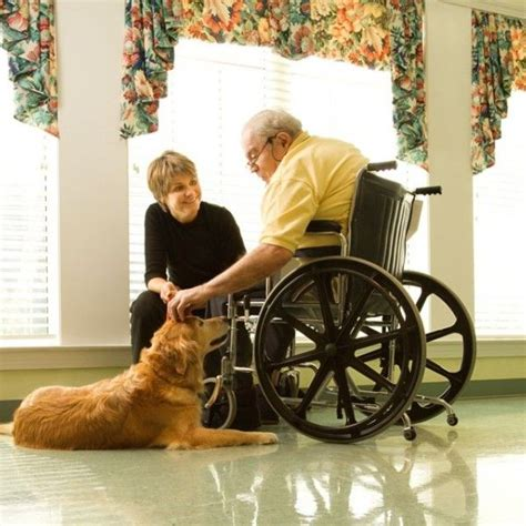 how to get your trained as a therapy best 25 therapy ideas on therapy dogs service