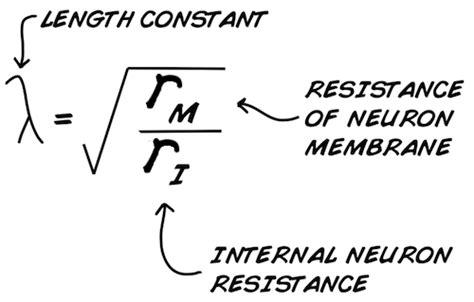 do resistors constant resistance experiment comparing speeds of two nerve fiber sizes