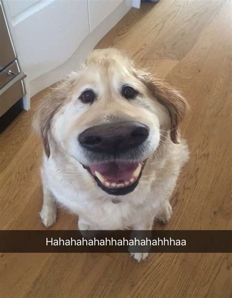 funniest hot dog snaps this snapchat filter makes your dog look like dug from up