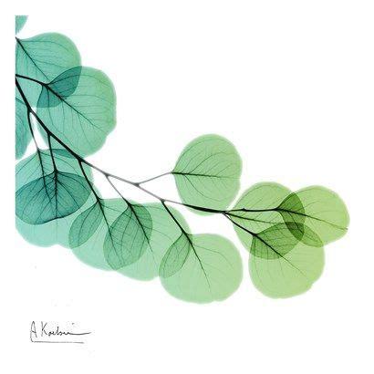 eucalyptus green arte popular pinterest acuarela