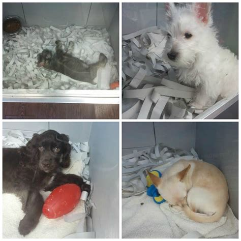 pet store puppies for sale petition grows to ban puppy and kitten sales in burnaby