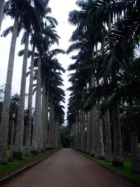 aburi botanical gardens ghana  images sensory