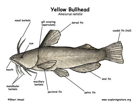 channel catfish tattoo