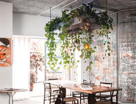 choose  indoor plant   home