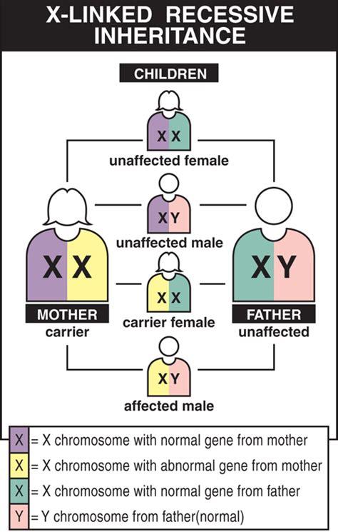 pattern dystrophy wiki genetic diseases y linked y linked genetic diseases