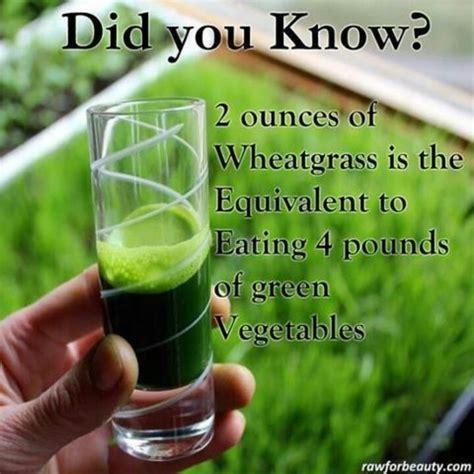 Wellness Wheat Grass benefits of wheat grass wellness wheat