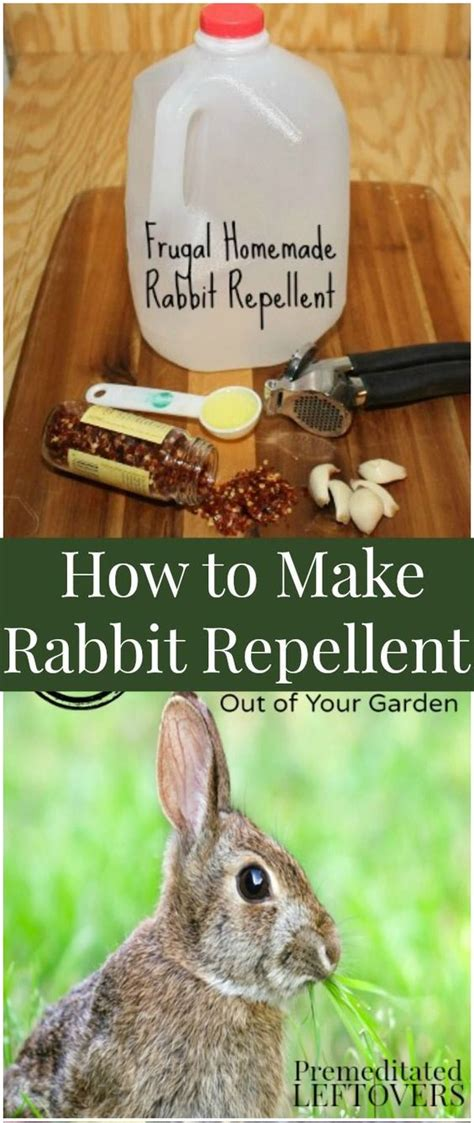 Rabbit Repellent For Gardens by How To Make Rabbit Repellent Gardens Read
